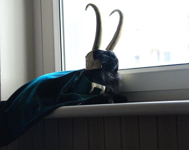 File:Loki Earth Seven.jpg