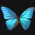 File:Butterfly Effect.png