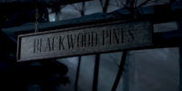 Blackwood Pines