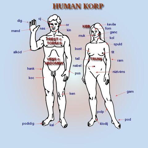 File:Human korp1.jpg