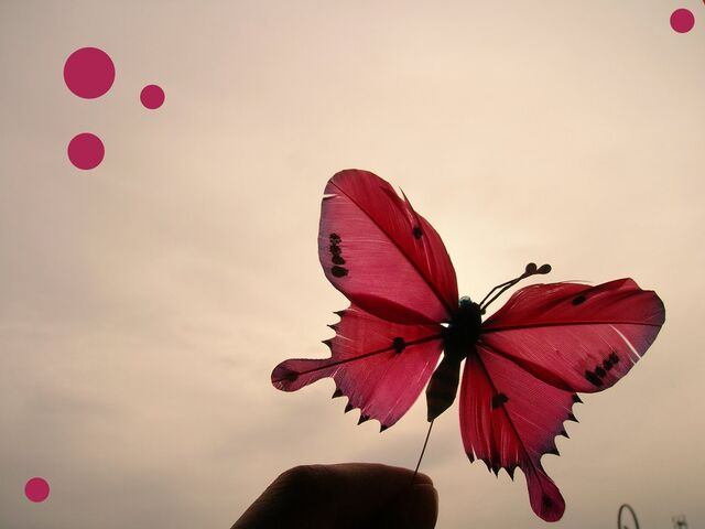 File:Red Butterfly by sugardealer.jpg
