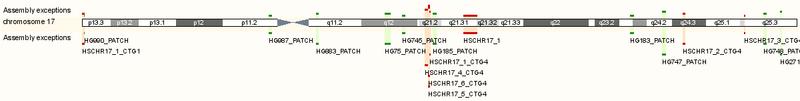 GAA chromosome 17 image