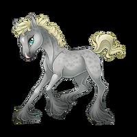 Silver Dapple Paaefarin Baby