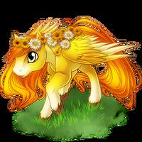 Daisy Pegasus Adolescent