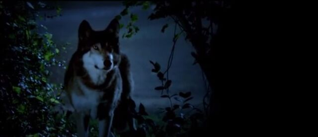 File:Babywolf.jpg