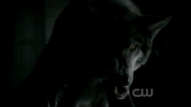 File:2x03-Bad-Moon-Rising-werewolf-the-vampire-diaries-tv-show-15812587-624-352.jpg