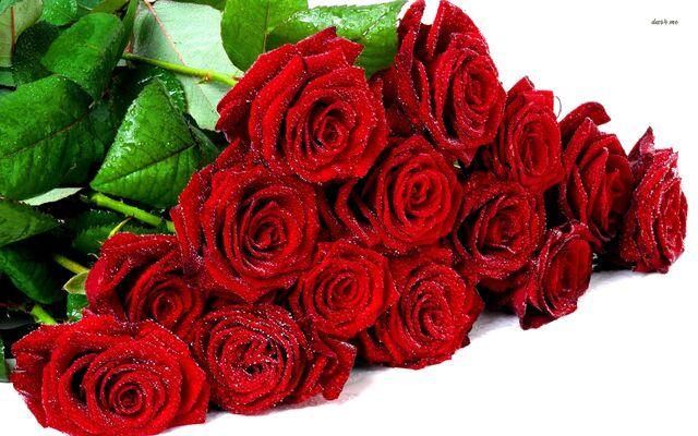 File:21360-bouquet-of-wet-roses-1680x1050-flower-wallpaper (1).jpg