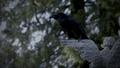 101-Crow-Angel.png