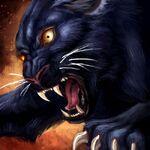 Blackcatsacredhalls