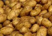 The potato family