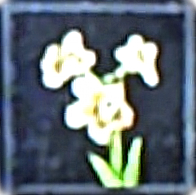 File:White Ivy icon.png