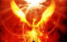 Pheonix-bird-phoenix-of-fire-414711