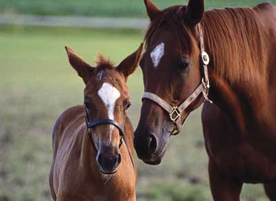 File:1355 Mare-and-Foal web.jpeg