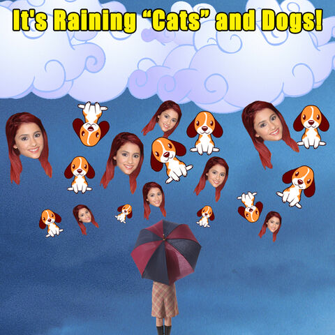 File:It's raining Cats and Dogs.jpg