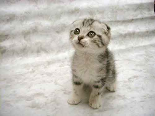 File:Cute-kitten.jpg