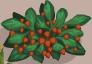 File:Strawberry Bush.png