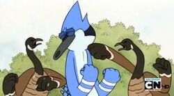 Regular show-a bunch of full grown geese 0004
