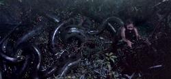 Anaconda4