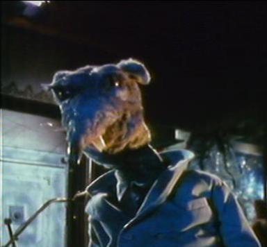 File:Trevor the Rat.jpg