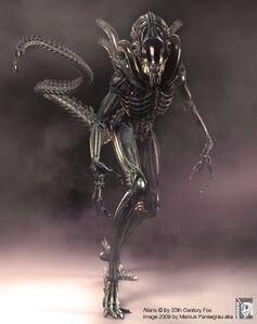 Aliens warrior cg sm05