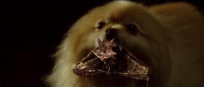 File:Pac-Man the Vampire Dog.jpg