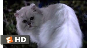 Stuart Little (1999) - Not Bad for a House Cat (10 10) Movieclips