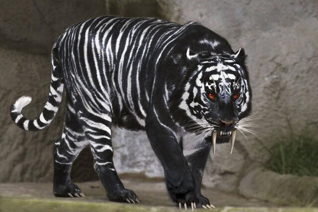 File:Black Tiger.jpg