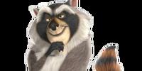 Norvirus Raccoon