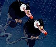 Vultures SWaSD