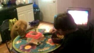 William and his cat eat cereal together