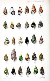 File:Seashell collection.jpg