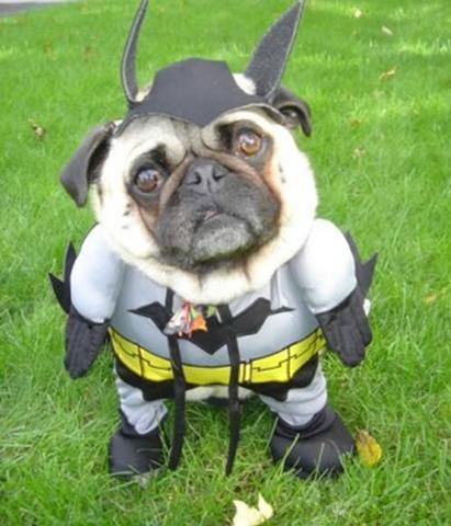 Plik:Bat-dog.jpg