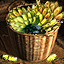 Plantain - Icon (Big)