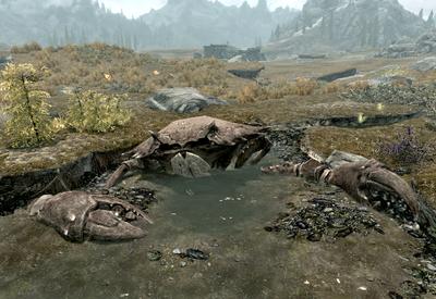Giant Mudcrab