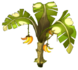 Citronana Tree