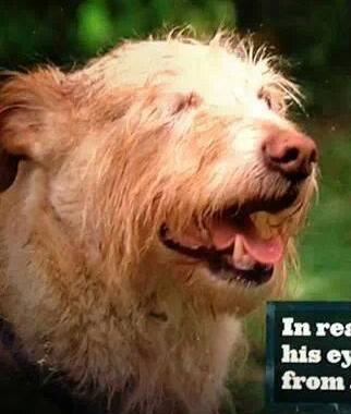 File:Dooley dog.jpg
