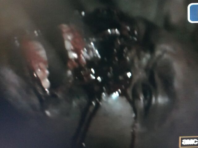 File:Walking Dead Sean.jpg