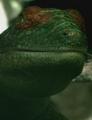 Petrolacosaurus new.png