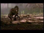 WWB1x4 AustralopithecusWalkingOnAll4s