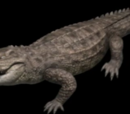 Parasuchus