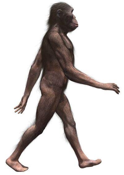 AustralopithecusInfobox