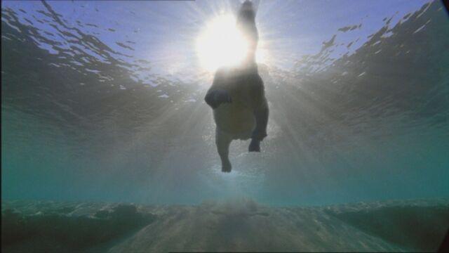 File:SM1x2 ArsinoitheriumSwimming2.jpg