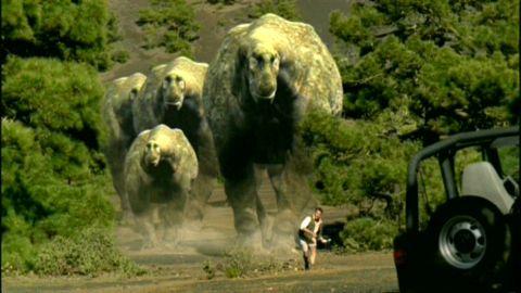 File:Herd of dinosaurs.jpg