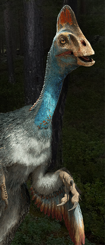 File:Chirostenotes WWD 3D.png