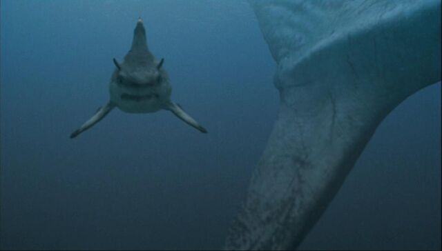 File:Hybodus shark.jpg