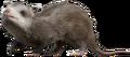 Large-mammal.png