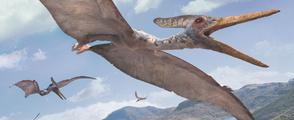 pteranodon walking with wikis fandom powered by wikia