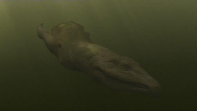 File:WWM1x3 ChasmatosaurSwimming.jpg