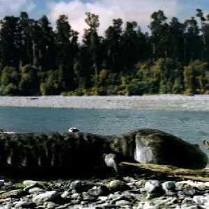 File:Koolasuchus.JPG