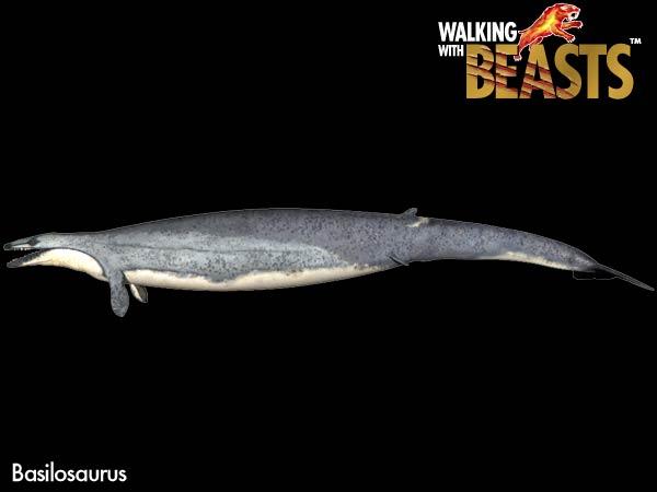 File:Basilosaurus large.jpg